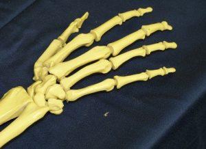 Wunderwerk Mensch Knochen