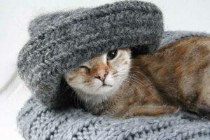 Trendmode für Herbst und Winter -Katze mit Schal